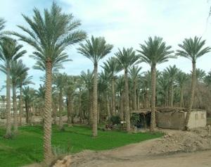 Εικόνα από την κοιλάδα του Νείλου στην περιοχή της Γκίζας.