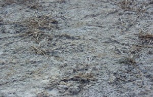 'Εδαφος με αλάτωση. Πηγή: eusoils.jrc.ec.europa.eu