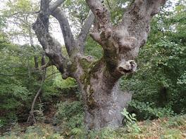 Εικόνα από τη βλάστηση της Σαμοθράκης, κοντά στο χωριό Θερμά, στο δρόμο προς τη Γριά Βάθρα.
