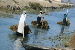 Άραβες των Βάτων οδηγούν τα κανό τους, που είναι φορτωμένα με καλάμια. http://scribol.com/anthropology-and-history/the-marsh-arabs-of-iraq