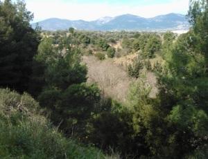 Η απότομη και στενή κοιλάδα του Κηφισού, ανάμεσα στην Πάρνηθα (πίσω) και την Πεντέλη. Η κοίτη του ποταμού διακρίνεται από τα φυλλοβόλα πλατάνια, που ξεχωρίζουν από την υπόλοιπη αειθαλή βλάστηση.