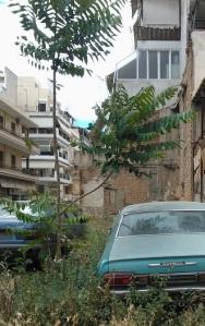 Εγκαταλελειμμένο οικόπεδο στα Πετράλωνα με παρατημένα αυτοκίνητα. Γύρω από το αυτοκίνητο στα δεξιά ευδοκιμεί το περδικάκι, ενώ ανάμεσα στα δύο αυτοκινητα έχει φυτρώσει μια βρωμοκαρυδιά.
