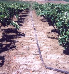 Αλάτωση του εδάφους σε αρδευόμενη καλλιέργεια στη Σικελία. Πηγή: http://projects.inweh.unu.edu/kmland/display.php?ID=276&DISPOP=VRCPR